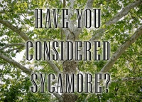 Have you considered using Sycamore?