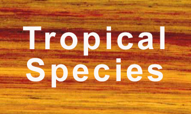 hardwood lumber tropical species